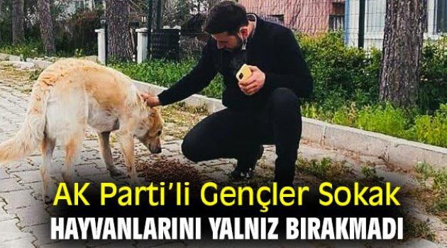 AK Partili Gençler Sokak Hayvanlarını Yalnız Bırakmadı