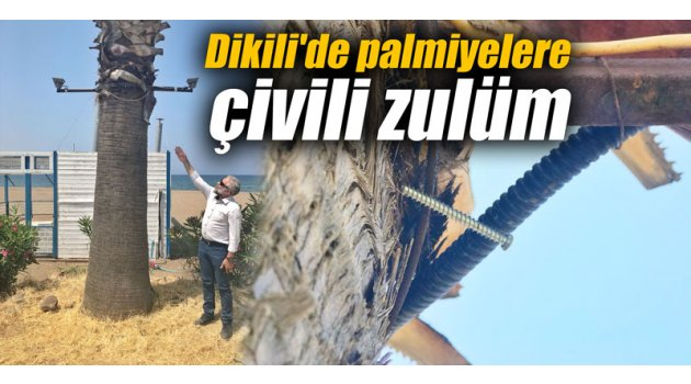 Dikili'de palmiyelere çivili zulüm