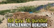 Kemalpaşa'daki kurban atıkları bayramdan beri temizlenmedi