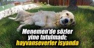 Menemen'de sözler yine tutulmadı; hayvanseverler isyanda